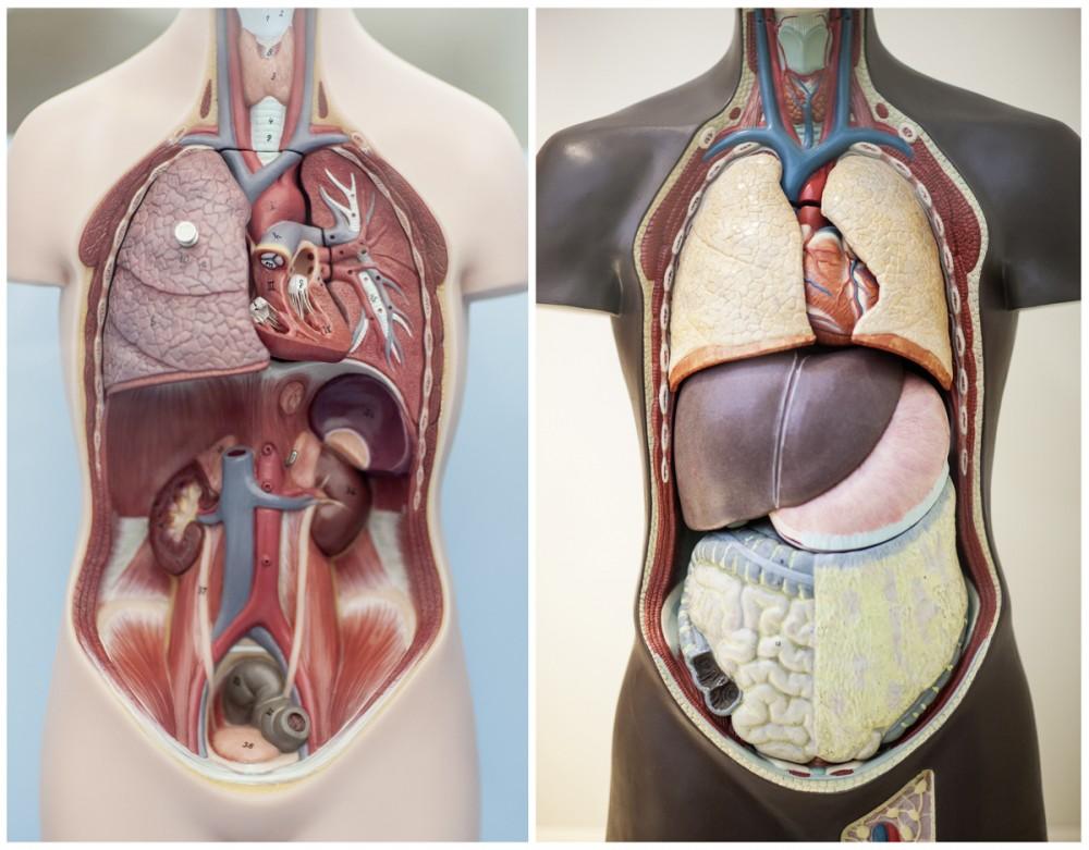 Organspende-Illustration